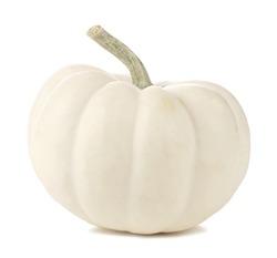 Single white mini pumpkin isolated on a white background