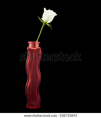 Single White Rose in a Red Glass Vase