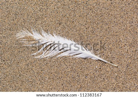 Single white sea gull feather washed up on the beach.  Ragged and battered.