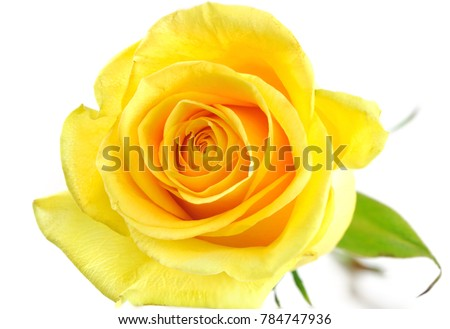 Single yellow rose isolated on the white background ez canvas single yellow rose isolated on the white background mightylinksfo