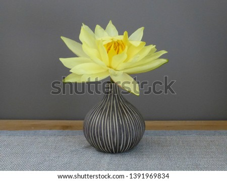 single yellow waterlily flower in dark taupe onion shaped vase on toning background #1391969834