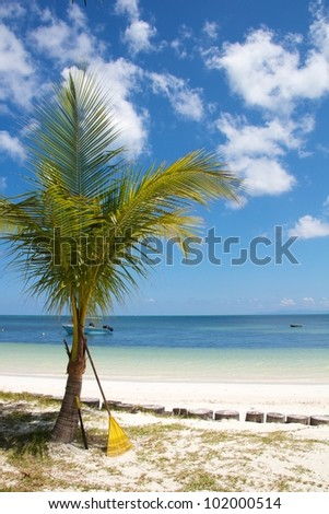Single young coconut palm tree with the gardener\'s rake leaning on its trunk with a boat on the Indian Ocean of Praslin island, Seychelles