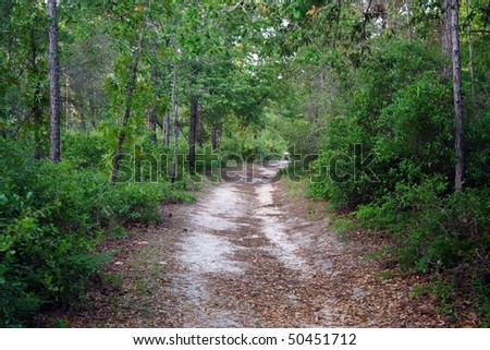 Sinkhole Trail, Silver River State Park, Florida