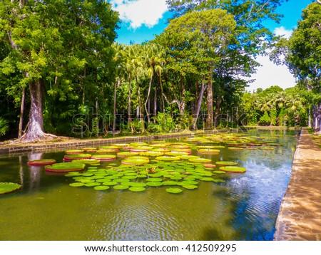 Sir Seewoosagur Ramgoolam Botanical Garden in Pamplemousses, Mauritius