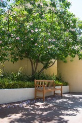 Sitting bench with shade thrown by a beautiful tree with pink flowers, with flower pedals on the ground, on a beautiful sunny summer day.