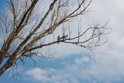 sitting birds on a branch of a dry tree. Summer birds of prey