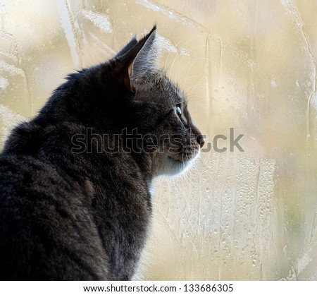 Sitting cat and watching through the window on a yellow light blur window background with rain drops, watching cat close up, cat looking right, autumn rain and kitten