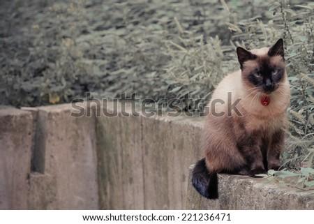 sitting cat vintage washed colors