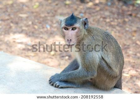 Sitting curious looking Monkeys in tropical Vietnam