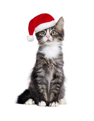 Sitting kitten wearing santa hat  isolated on white background