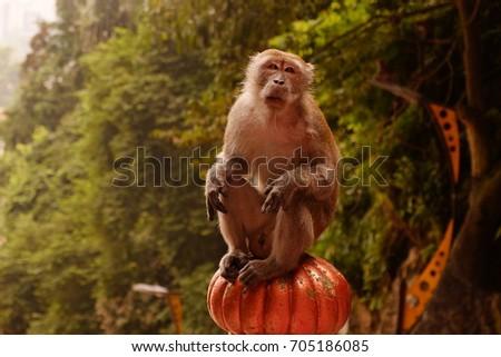 sitting monkey face #705186085
