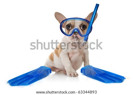 Sitting Puppy Dog With Snorkeling Gear of a Mask With Fins. Studio Shot