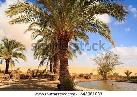 Siwa Oasis Egypt Tourism Travel Foto stock ©