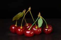 Six berries of a ripe red cherry are connected by a petiole in pairs.