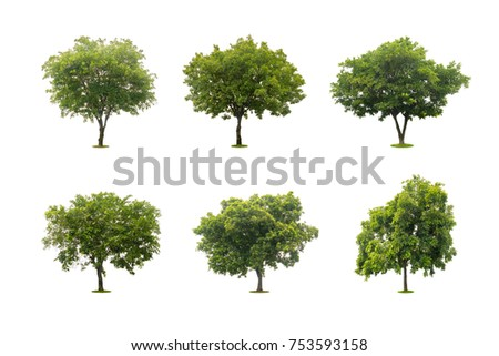 six collection of beautiful green tree isolated on white #753593158