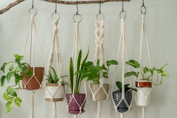 Six handmade cotton macrame plant hangers are hanging from a wood branch. The macrame have pots and plants inside them.