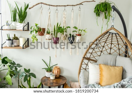 Six handmade cotton macrame plant hangers are hanging from a wood branch. The macrame have pots and plants inside them. There are decorations and shelves on the side with an egg chair and a table. Stockfoto ©