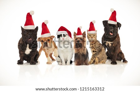 six happy cats and dogs wearing santa hats sitting and standing on white background