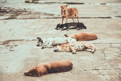 six homeless stray dogs sleeping on the street , color vintage style