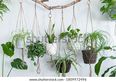 Six jute twine macrame plant hangers are hanging from a driftwood branch. Some of them have wooden rings used as decor to add character to the crafts. A nice variety of plants and pots are used. Foto d'archivio ©