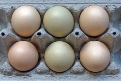 Six organic chicken eggs in carton