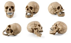 Six plastic human skulls with open jaws at various angles isolated on white background