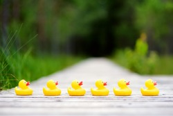 Six rubber ducklings crossing the street to get to the other side