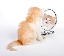Six weeks old kitten looking in a mirror