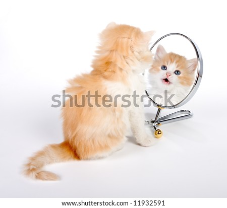 Six weeks old kitten looking in a mirror