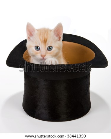 Six weeks old red kitten in a magical hat