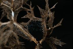 Skeletal leaf on a black background close-up