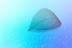 Skeletal leaf on a light blue background. Raindrop. The natural structure of the leaves. Easy image tinting.