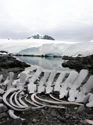 skeletal remains in Antarctica