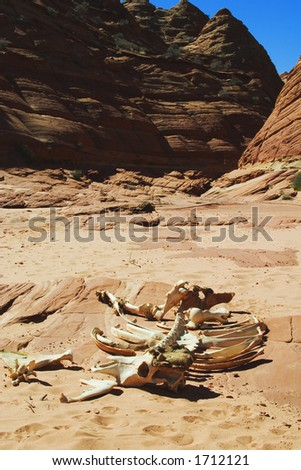 Skeletal remains of cow in dry wash, Coyote Buttes area of Paria Canyon, Vermilion Cliffs Wilderness, Arizona.
