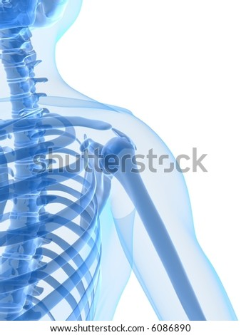 skeletal shoulder