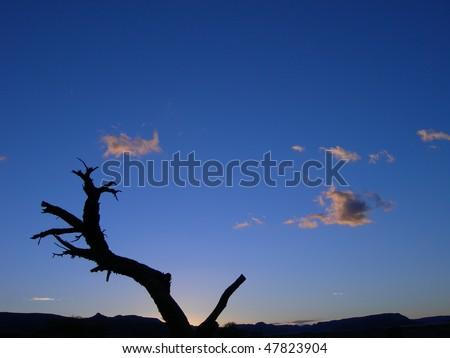 stock-photo-skeletal-tree-silhouette-against-the-clouds-of-the-kalahari-desert-in-namibia-africa-47823904.jpg