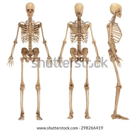 skeleton Foto stock ©