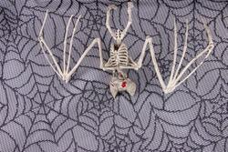 Skeleton Bat hanging from Halloween spider web background