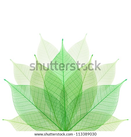 Skeleton leaf abstract background