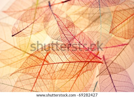 Skeleton leaves background - stock photo