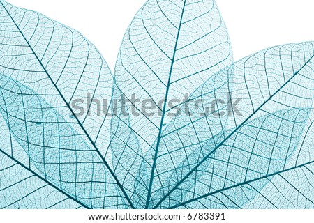 Skeleton Leaves Composition on white background
