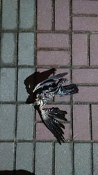 Skeleton of a dead decomposed bird on the sidewalk at night