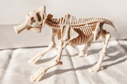 Skeleton of a monstrous animal . Mammal bones anatomy