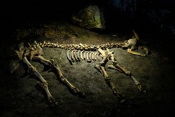 Skeleton of an ancient animal in a Mammoth cave in the Republic of Crimea, Russia. October 2, 2020