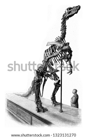 Skeleton of an Iguanodon from Bernissart, vintage engraved illustration. From the Universe and Humanity, 1910.