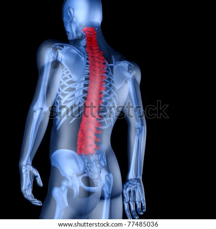Skeleton of the man with the backache. 3D the image of a man's skeleton under a transparent skin