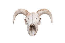 Skeleton, sheep s head with horns.