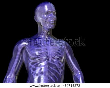 Skeleton, Transparent Man