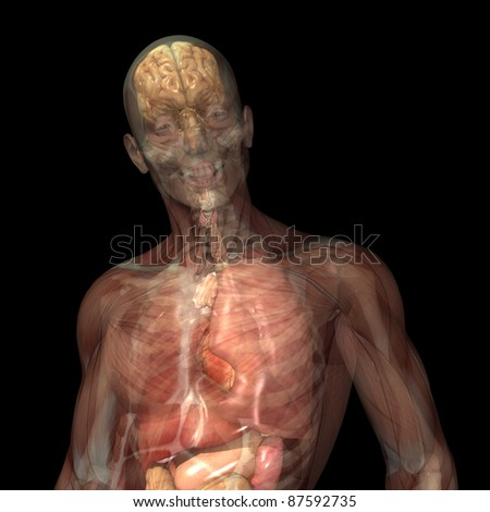 Skeleton X-Ray - Muscles and Internal Organs.  X-Ray of a male skeleton displaying his skin, muscles, internal organs, and skeletal structure. Isolated on a black background