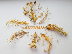 Skeletons of dry leaves with streaks on a white background close-up with the inscription AUTUMN, autumn concept